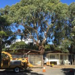 Confined Space Tree Pruning Melbourne