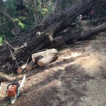 Emergency Arborist Services Melbourne