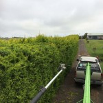 Hedge Pruning Melbourne