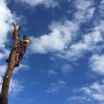 Tree Removal Melbourne Arborist