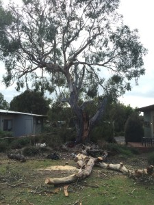 Tree inspections by our arborists in Inverloch can prevent storm damage.